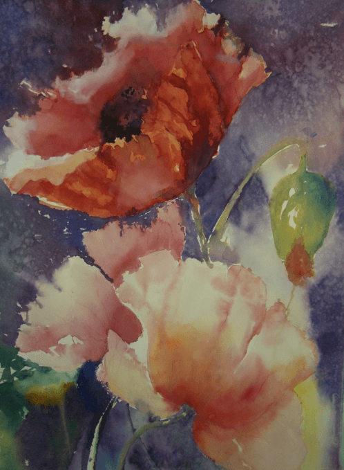 Watercolour painting of a poppy by jude scott.