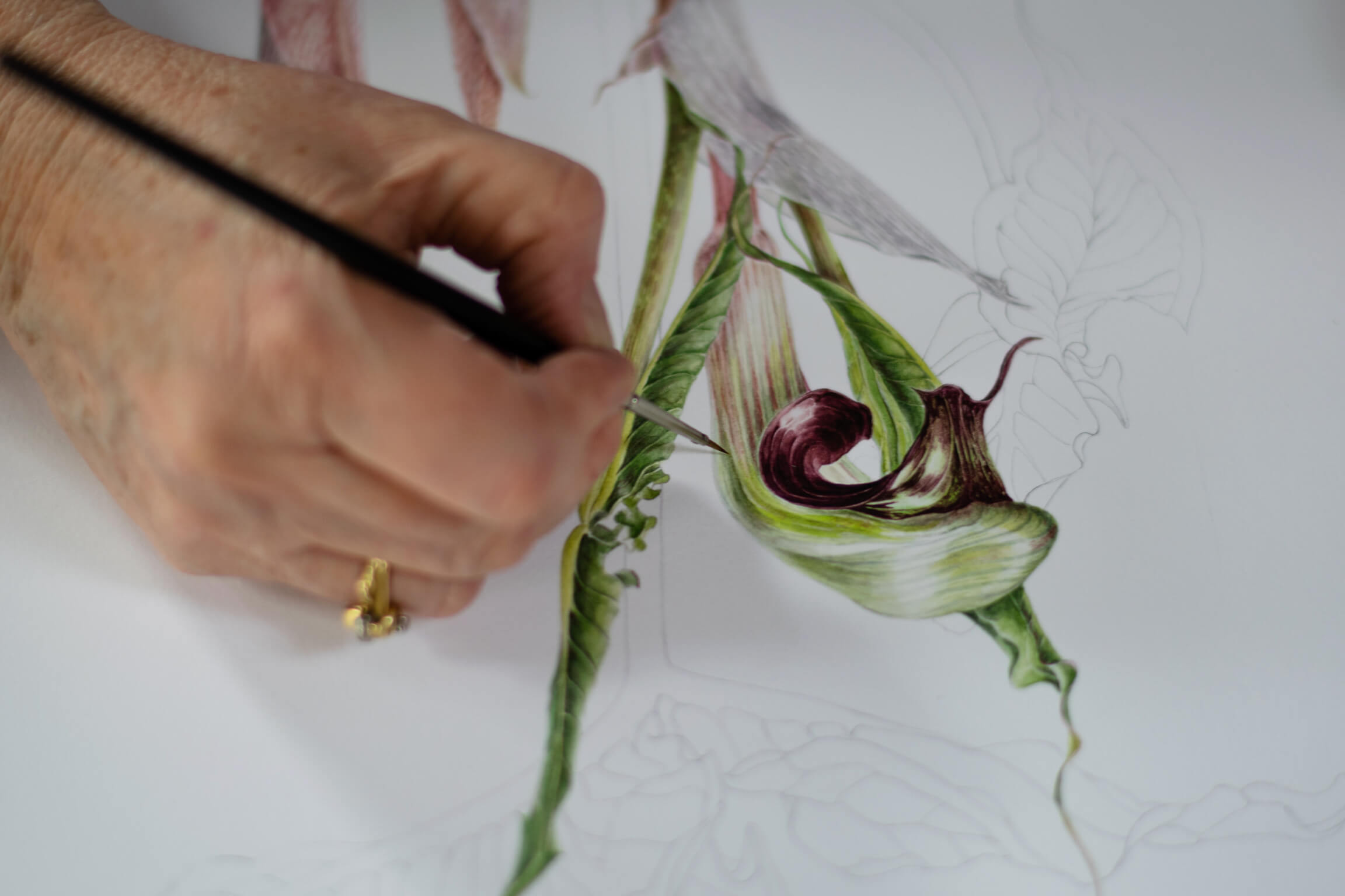 Woman's hand holding a paint brush and painting an orchid.