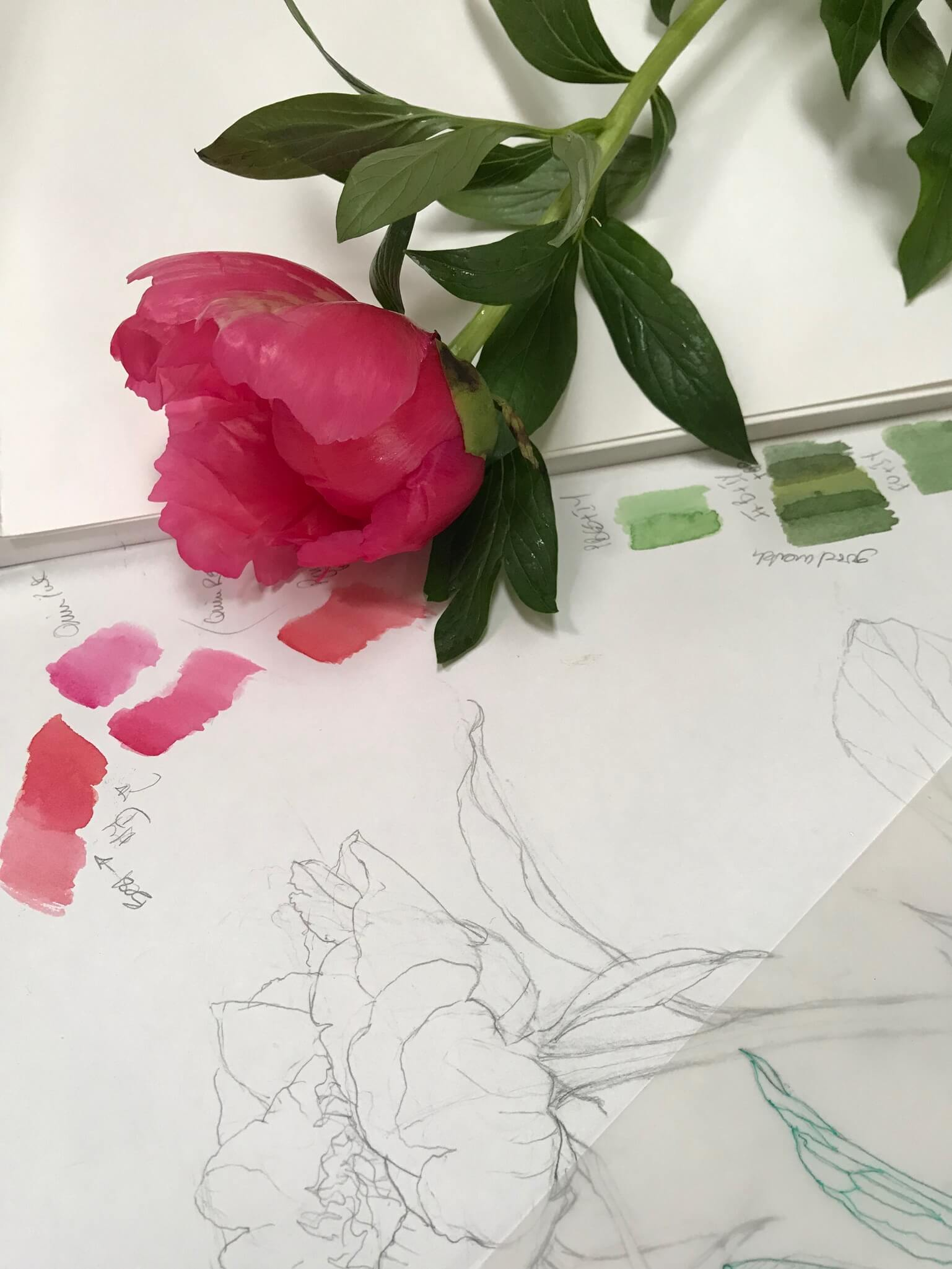 Pink flower with green stem on top of an open sketch book.