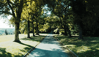 Tree lined driveway. Trees on either side of the drive.